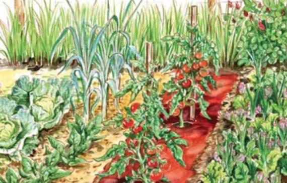 Come impostare l'orto a cura di Renato Tonon Biogiardino